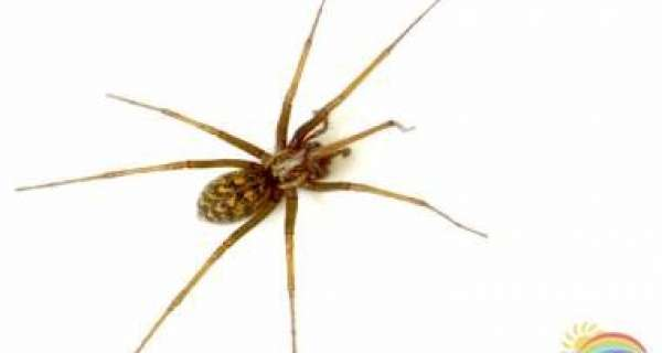 Should you or shouldn't you kill spiders in your home?